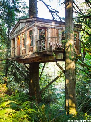 home insurance trees close to house 7 cool tree house hotels mainstreet