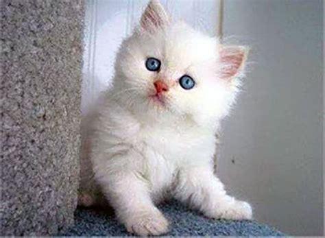 Kitten Medium Lucu gambar kucing http www dagelanmeme gambar