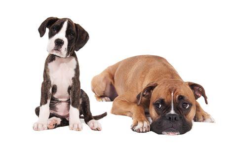 why puppies bite why bites are no barking matter and how to keep your rates low macneill