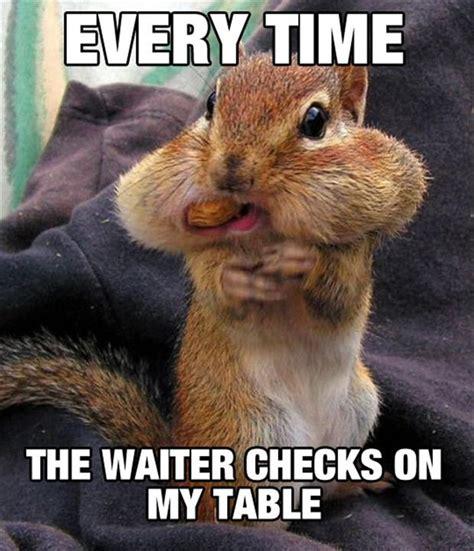 Chipmunk Meme - funny squirrel memes