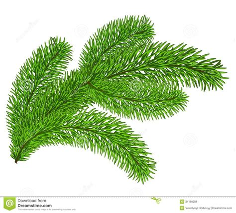 Evergreen Tree Clip by Evergreen Bough Clipart Clipart Suggest