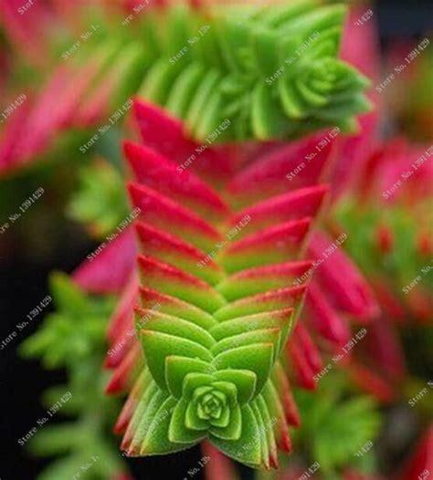 imagenes de hojas raras m 225 s de 25 ideas fant 225 sticas sobre suculentas tipos en
