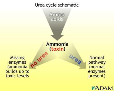Ammonia Detox Symptoms by Periorbital Edema In Symptoms Causes Symptoms Of