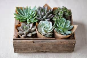 Succulent House by Sprinkling Amp Decorating With Succulents Around The House