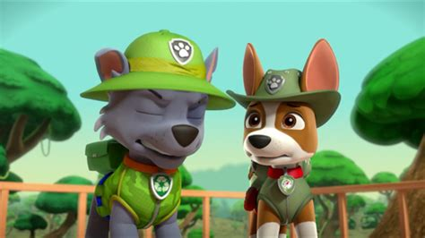 what of is tracker from paw patrol tracker paw patrol