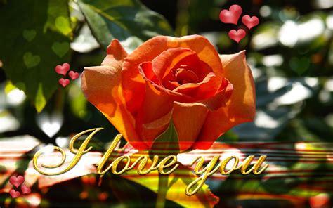 wallpaper flower i love you wallpaper love rose valentines day i love you