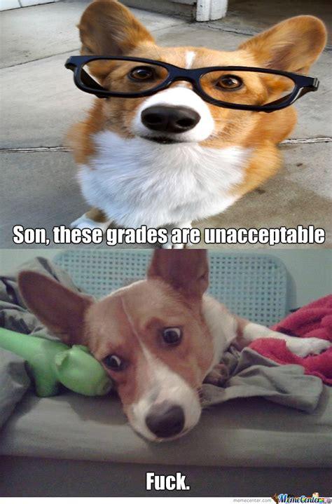 Funny Corgi Memes - pics for gt funny corgi meme