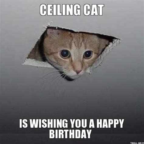 Happy Birthday Cat Memes - memes vault funny happy birthday meme with cats birthday