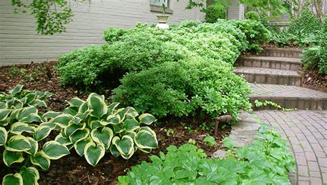 southeast gardening 3 great shrubs worth a second look