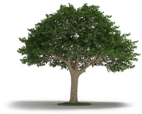 free tree model tree neem tree 3d model cgtrader