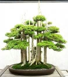bonsai care manual bonsai tree forest and bonsai trees on