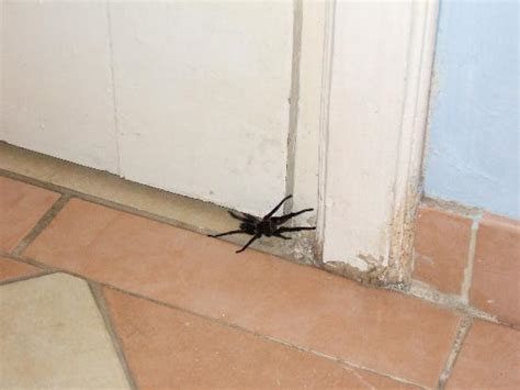 spider room chagne table picture of hotel playa pesquero rafael freyre tripadvisor