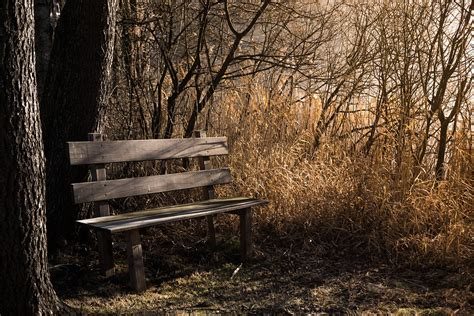 bench in forest free photo bench bank seat nature out free image on