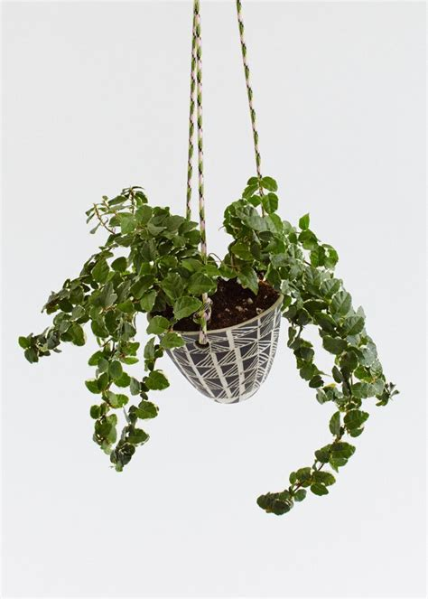 small hanging plants small hanging planter ii