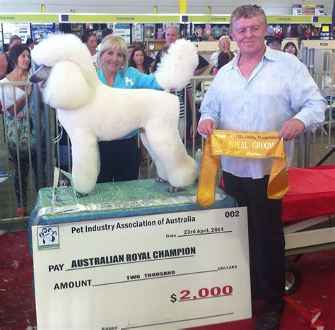 best in show grooming poodle wins best in show at sydney royal grooming competition dogslife breeds