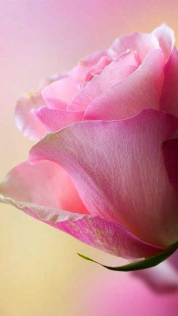 4 the love of go l d things i love about october rose