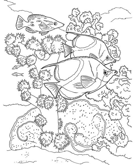 coral reef coloring book sle dover color it