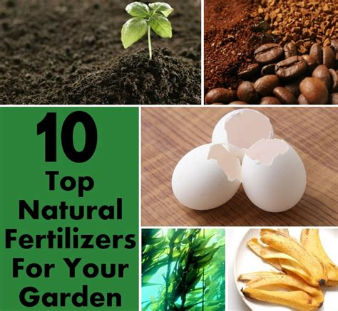 Top 10 Natural Fertilizers For Your Garden DIY Home Things