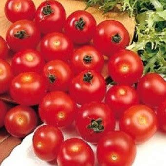Benih Biji Cherry Ungu benih tomat cherry besar 5 biji non retail