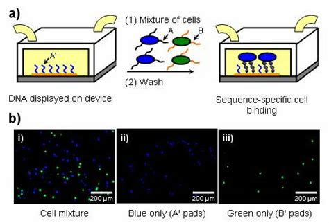 pattern matching organic molecules lab research news berkeley researchers lay groundwork for