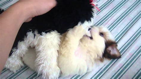 shih tzu stuffed shih tzu pup with pup stuffed