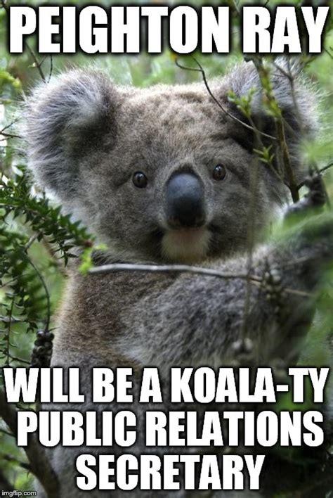 Koala Meme Generator - image tagged in koala imgflip