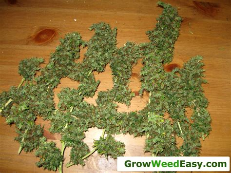 What Do I Need To Get Started Growing Cannabis Indoors