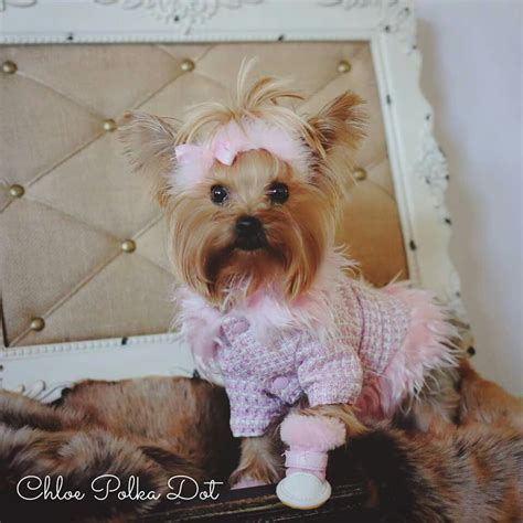 sweetheart pet clothes yorkie yorkshire terrier