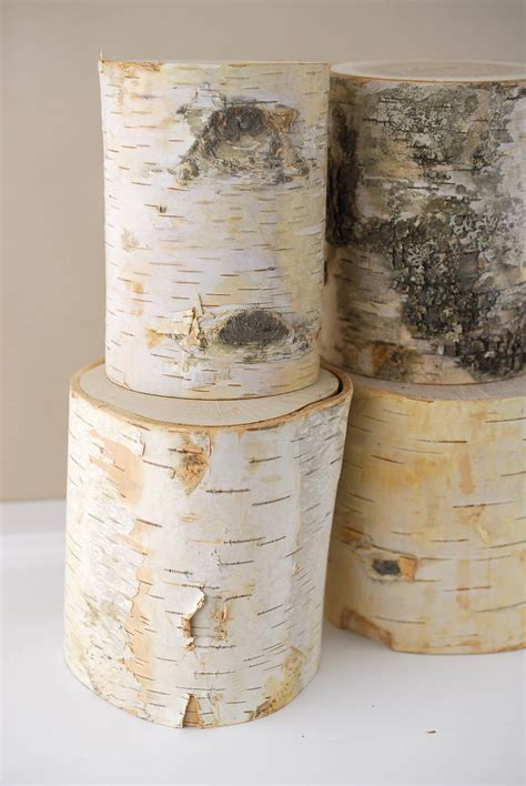 Birch Tree Paper For Crafts - nature 5 quot birch branch