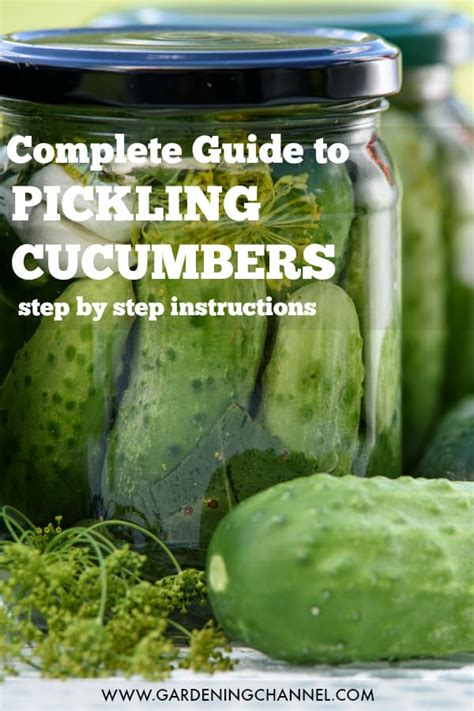pickle cucumbers gardening channel