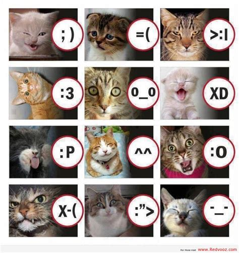 Cat Meme Faces - funny cat face expressions gag fire