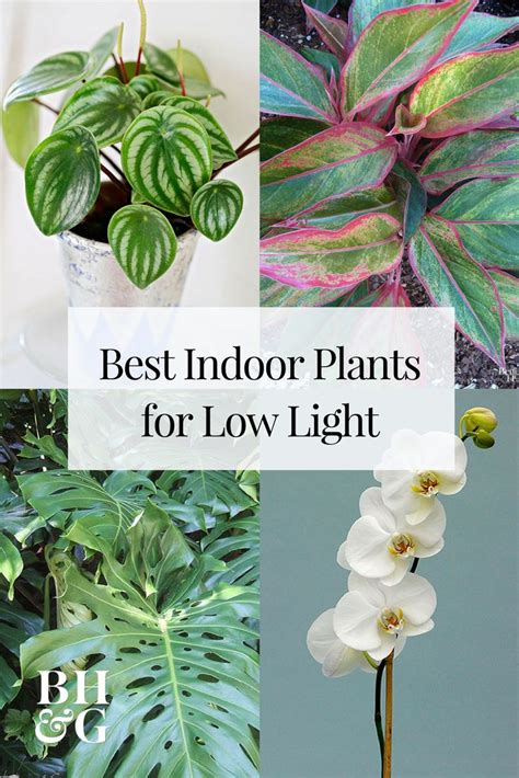 plants that thrive in low light 4968 best gorgeous garden plants images on pinterest