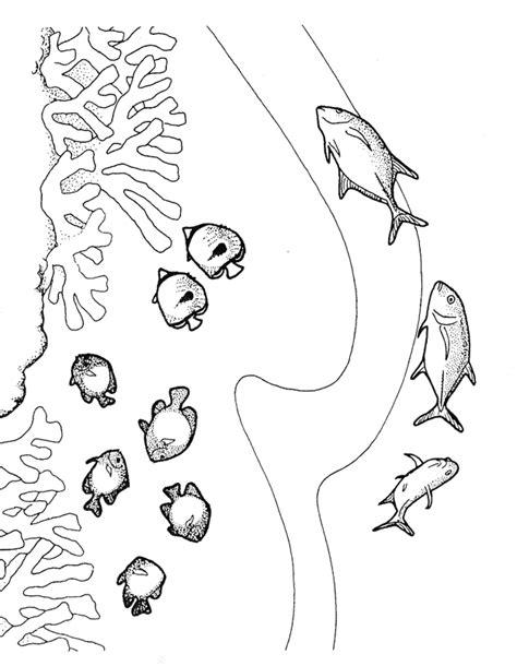 coral food coloring coral reef coloring pages coloring home