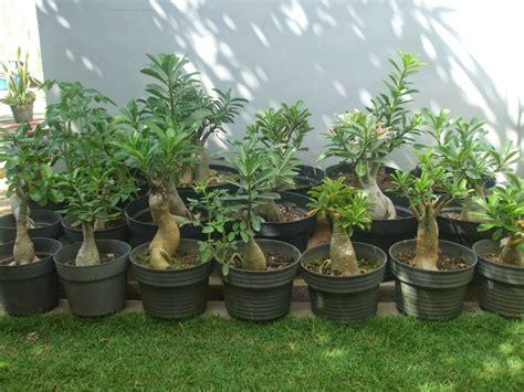 Lu Hias Taman jenis tanaman hias rumah minimalis yang cocok rumah