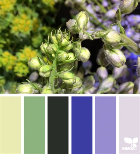 design seeds flora hues design seeds