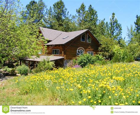 Country Cabin Plans log cabin home in a country meadow of yellow poppies stock