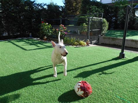 giardini per cani foto giardino per cani di geogreen di cenedella giuseppe