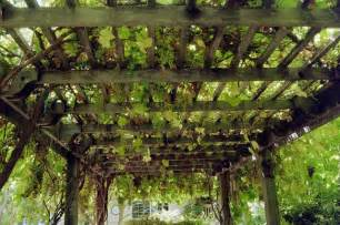 Grape Pergola by Grape Arbor Overhead