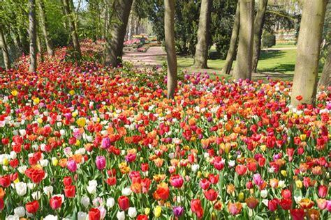 primavera in fiore fiandre primavera in fiore vivereinviaggio