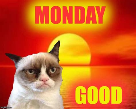 Grumpy Cat Monday Meme - grumpy monday imgflip