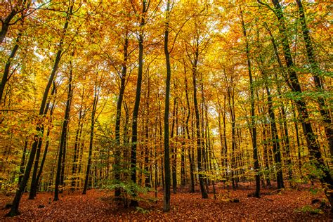 imagenes naturaleza otono fondos de pantalla bosques alemania oto 241 o klotten 225 rboles
