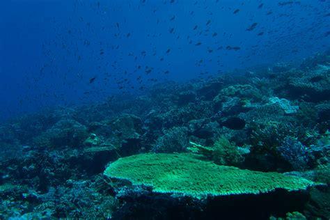 dive komodo komodo diving diving