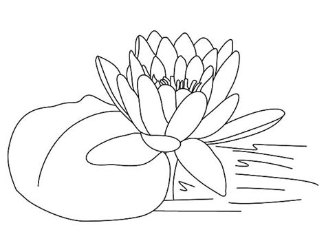coloring pages of lots of flowers frog sitting on lilypads and lotus flower coloring pages