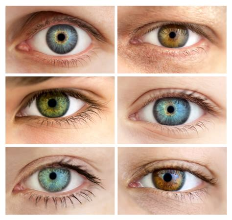 activity pattern znaczenie what determines the color of your eyes wonderopolis