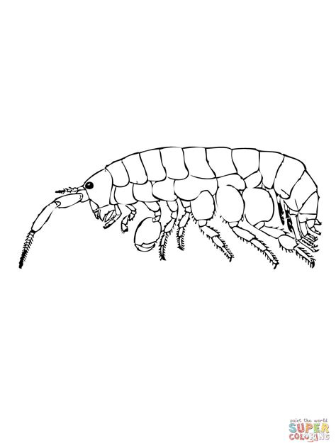 sand flea coloring free printable coloring pages