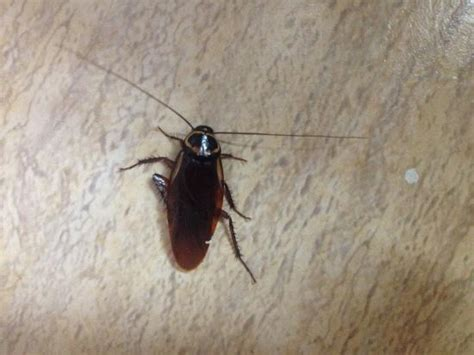 roaches in bathroom only clubhotel riu merengue now 100 was 1 2 3 updated
