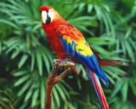 birds wallpaper pictures top ten beautiful birds top 10 parrot wallpaper