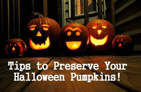 how to preserve pumpkins for tricks and treats to keep your pumpkin welcome to mpc