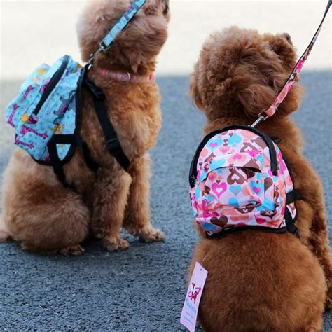 backpack for dogs best 25 accessories ideas on