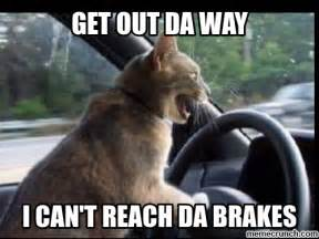 Driving Meme - cat driving meme quotes